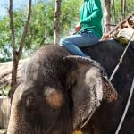 Elephant Treck